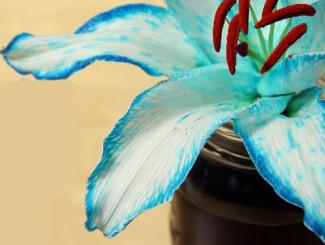 Bông hoa với màu sắc lạ lẫm